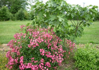 massif-fleurs-anjou