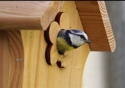 nichoir-oiseau