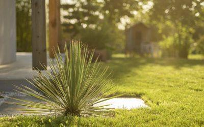 Entretenir une belle pelouse