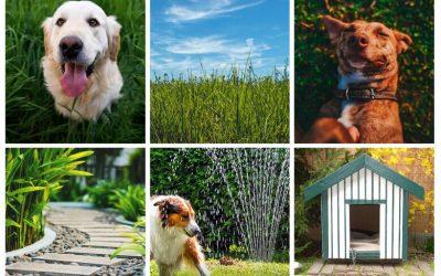 Nos conseils pour les propriétaires des chiens